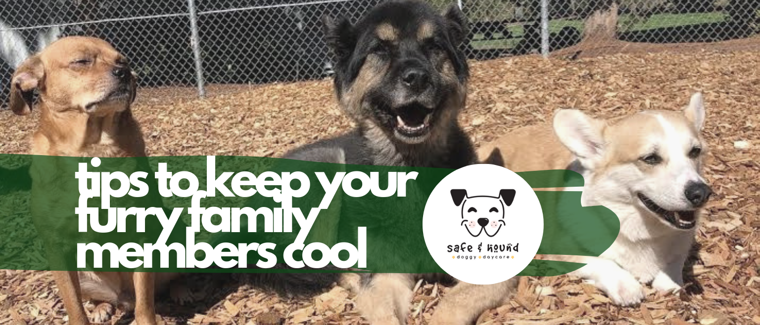 Copy of tips to keep your furry family members cool 1